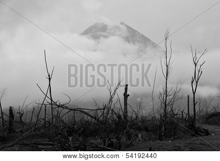 Burned Forest & Volcano Background