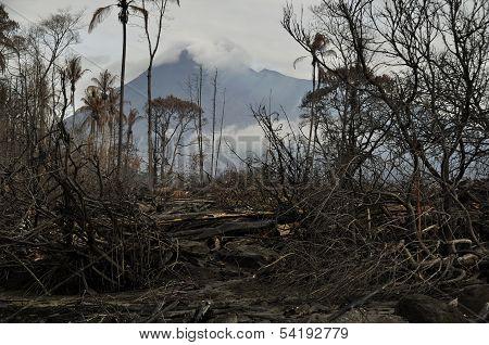 Burned Trees & Merapi Background