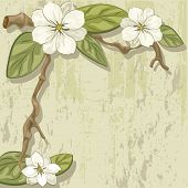 foto of slab  - blooming magnolia branch on a stone slab - JPG