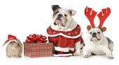 picture of rudolph  - christmas pets  - JPG