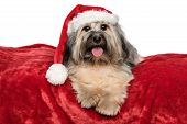 Cute Christmas Havanese Dog With A Santa Hat Is Lying On A Red Blanket