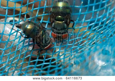 Fly On Blue Net