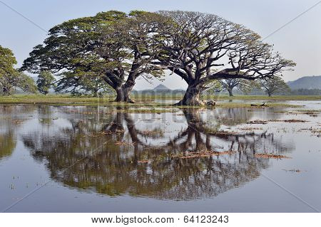Trees reflected in lake, Sri Lanka