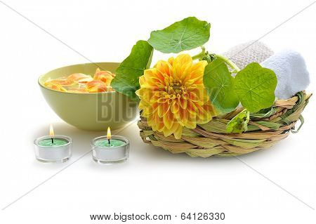 green nature spa still life on white background