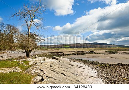 Rocks and trees on the Silverdale coast