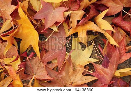 pile of fall leaves in warm colors