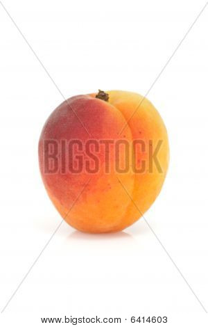 Single apricot