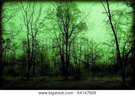 Spooky Foggy Woods