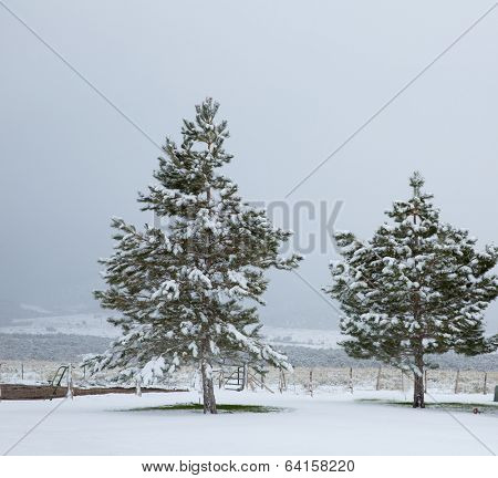 Nevada USA first snow at the park covering all in white