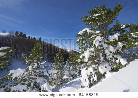 winter scene in the valley of Aspe, Pyrenees, France