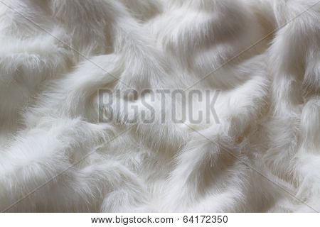 White Fur As Abstract Texture