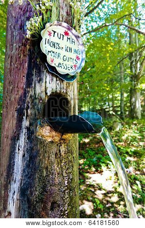 fresh drinking water from a well in the forest