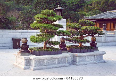 Bonsai trees in the Chi Lin Nunnery garden
