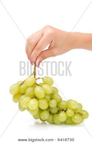 The Female Hand Holds One Grapes