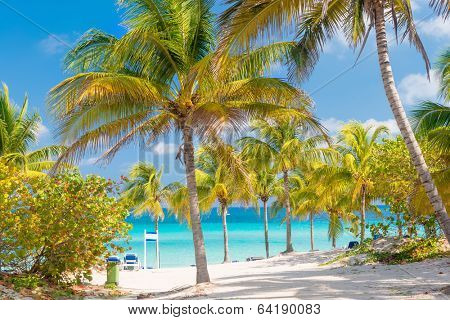 Coconut palms and white sandy beach on a sunny day in Varadero  in Cuba