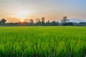 stock photo of rain clouds  - Green rice fields landscape background of sunset - JPG