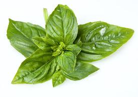 stock photo of basil leaves  - Basil on a white background - JPG