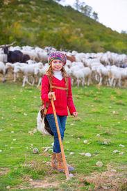 pic of shepherdess  - Kid girl shepherdess happy with flock of sheep and wooden stick in Spain - JPG