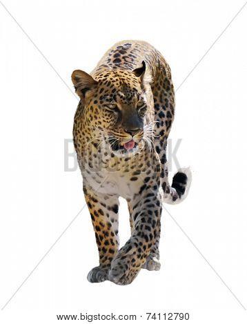Digital Painting Of Walking Leopard