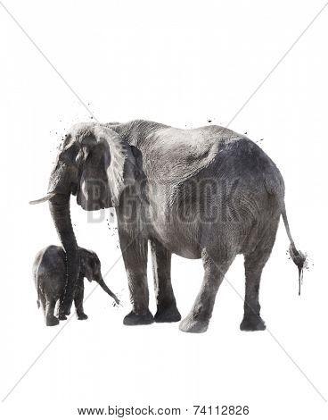 Watercolor Digital Painting Of  Elephants