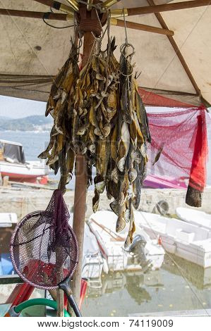 Turkish Traditional Stockfish Outdoor Drying Closeup