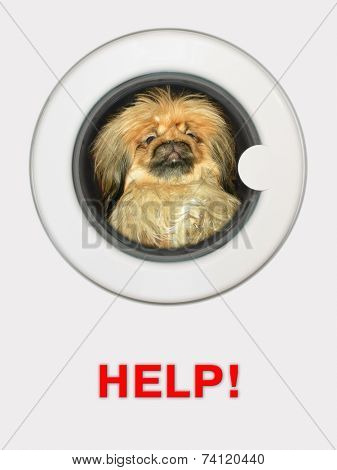 Afraid dog (pekinese) in washing machine - Help!