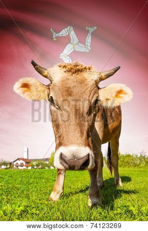 Cow With Flag On Background Series - Isle Of Man