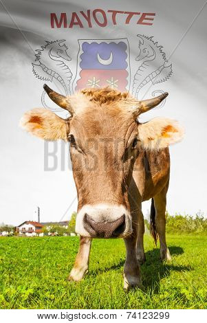 Cow With Flag On Background Series - Mayotte