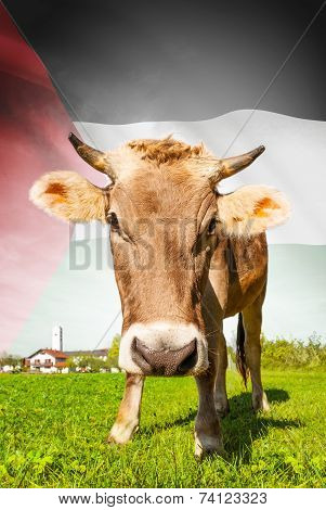 Cow With Flag On Background Series - Palestine
