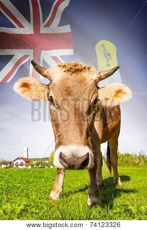 Cow With Flag On Background Series - Saint Helena