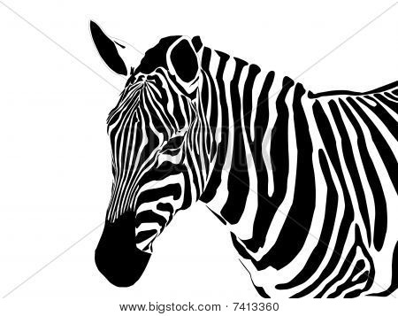HalfBody Zebra.