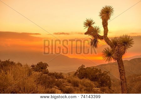 California Desert Scenery