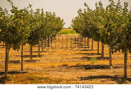 California Orchards
