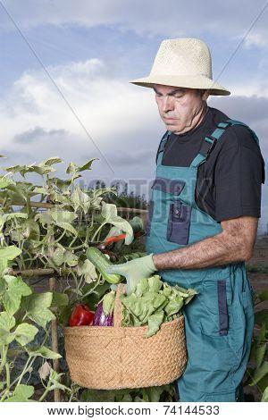 Farmer Collecting