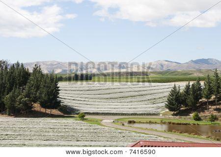Covered Vineyards
