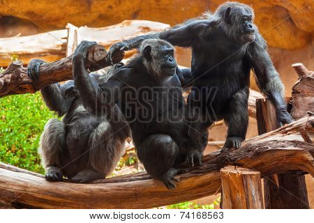 Monkeys in park at Tenerife Canary - animal background