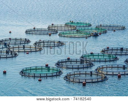 Fish farming Greece