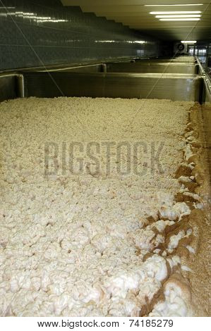The foam during beer fermentation