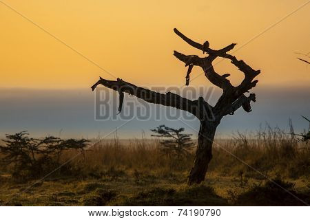 first light hitting dead tree in Nairobi National Park