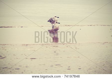 Nature Background. Birds On The Beach.