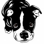 stock photo of puppy dog face  - Cute little black and white bulldog puppy looking at us - JPG