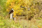 stock photo of shacks  - Old shack or out house with vegetation all around - JPG