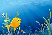 pic of fantail  - Gold fish in sea - JPG