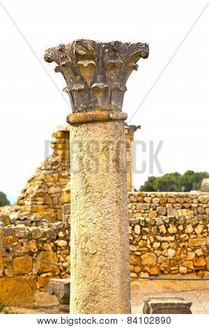 Volubilis In Morocco Africa   Deteriorated Monument And Site