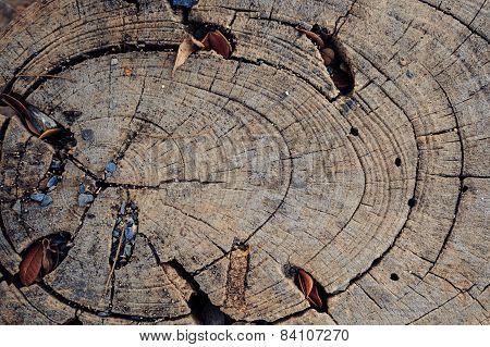 Hard Wood Timber Background