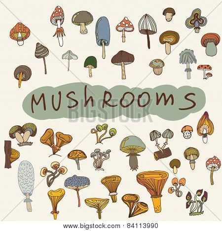 Set Of Hand-drawn Mushrooms