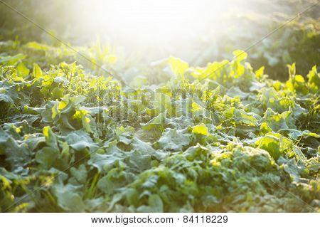 Closeup Of Frosty Grass