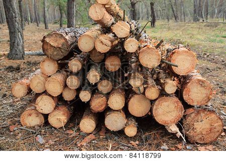 Freshly Felled Trees Piled In A Heap