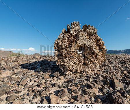 Dried Tree Trunk on Rocks