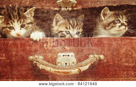 Curiosity kittens in a suitcase